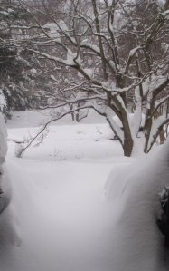 { day two of storm number two, view from my front door }